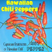 HOT HAWAIIANER PAPRIKAS ~ Capsicum frutescens cv