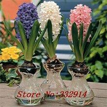 Hot Sale! 1000pcs / bag Rare Chinese Hyacinthus Seeds 20 verschiedene Bonsai-Baum-Samen Garten neue Pflanzen Anti-Radiation