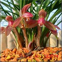 Hot Sale! 100pcs / bag Rare Chinese Cymbidum Seeds 20 verschiedene Bonsai Blumensamen Garten neue Pflanzen Anti-Radiation