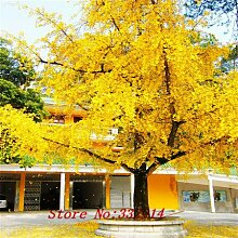 Hot Sale! 50pcs / bag Seltene chinesische Ginkgo-Samen 20 verschiedene Bonsai-Baum-Samen Garten neue Pflanzen Anti-Radiation