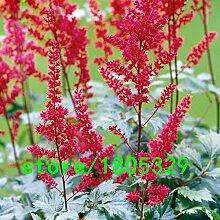 Hot Sale Red Astilbe chinensis Samen Balkon Garten Terrasse Topfbonsaipflanzen Chinese Astilbe Blumensamen 100PCS