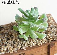 HUAYIFANG Die Fleischigen Pflanze Liefert Mini