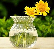 Hydrokultur Pflanzen Streifen Form Glas Flasche