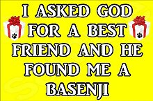 I fragte God For A besten Freundin und HE gefunden Me A Basenji Hund - Jumbo Magnet/Jubiläum