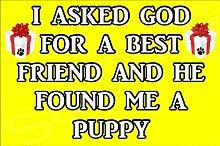 Ich fragte Gott für ein Best Friend und er gefunden Me A Puppy Hund–Jumbo Magnet als Geschenk/Geschenk