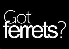 Idakoos Got Ferrets? - Hobbies - Aufkleber Packung