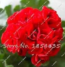 IDEA HIGH Samen-100 Stücke Geranium Blume Seltene