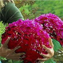IDEA HIGH Samen-Bonsai 50 Stück Mehrere