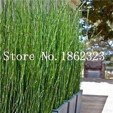 Bambus Balkon Gunstig Online Kaufen Lionshome