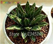 IDEA HIGH Seeds-100 pcs/bag Bonsai Blume Pflanze