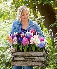 IDEA HIGH Seeds-100 pcs Hyazinth Bonsai,