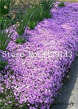 IDEA HIGH Seeds-100 Pcs Seltene FELSEN Kresse