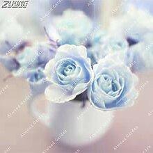 IDEA HIGH Seeds-ZLKING 200 Stück Dutch Rose