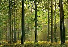 Idealdecor 216 Autumn Forest, 366 x 254 cm