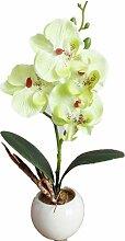 Igemy Vier Schmetterling Orchidee Meaty Plant Bonsai Kreative Blumen Arrangieren Zubehör (Green)