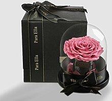 Importiert Live Blume Geschenk-box/Glas Rosen