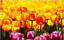 Individuelle Tapete Tulip Flower Sea HD Tapete