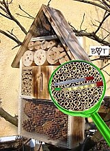 Insektenhotel geflammt gebrannt schwarz natur Gartendeko Nistkasten Gartendeko Insektenhotel groß 50 cm mit Lotus-Effekt Oberflächen Beschichtung und 2 Sichtgläsern 8 und 11 mm Beobachtungsröhrchen komplett mit Füllmaterial, Insektenhäuschen - biologischer ökologischer natürlicher Pflanzenschutz - ökologische biologische natürliche Blattlausbekämpfung - Insektenhotel zum Hängen und zum Aufstellen - Tolle Farbwahl – Marienkäferhaus Schmetterlinge Gartendeko