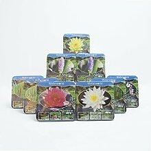 Inter Flower- 9 verschiedene TeichpflanzenJetzt einsetzen ! Komplettes Wasserpflanzenpaket ,Teichpflanzen