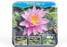 Inter Flower - Jetzt einsetzen ! Komplettes Wasserpflanzenpaket ,Seerosse rosa ,Teichpflanzen