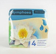 Inter Flower - Jetzt einsetzen ! Komplettes Wasserpflanzenpaket - Nymphaea - Seerose - WEISS, Teichpflanzen im Pflanzkorb für den Teich, Gartenteich, Garten - wunderschön