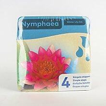 Inter Flower - Jetzt einsetzen ! Komplettes Wasserpflanzenpaket - Nymphaea - Seerose - PINK, Teichpflanzen im Pflanzkorb für den Teich, Gartenteich, Garten - wunderschön