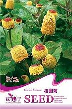 Jambú Zahnweh Pflanze Staude Blüte Samen, Originalverpackung, 30 Samen / Pack, Parakresse Gartensamen A221