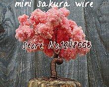 Japanisch 20 Stück 5 Arten Sakura-Samen