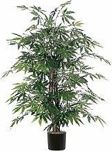 Japanischer Ahorn Bush Baum im Topf