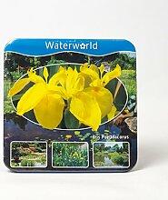 Jetzt einsetzen ! Komplettes Wasserpflanzenpaket