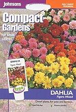 Johnsons Samen, Bildhaftes Paket Blumen Dahlien Figaro, gemischt, 40 Samen