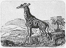 JoneAJ Home Teppich Giraffe Badematte Geschnitzt