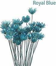 Joyas 30 natürliche Pflanzen erhalten