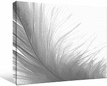 JP London bwcnv2414Monochrome 24145,1cm Dick Schwergewicht Schwarz & White Gallery Wrap Leinwand Art Wand Pink Feder Burlesque Wind Tapeten, 61x 45,7cm