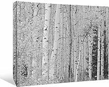 JP London bwmcnv21955,1cm Dick Schwergewicht Schwarz & White Gallery Wrap Leinwand Boreal Birken Wald Baumstämme Tapeten, 91,4x 61cm