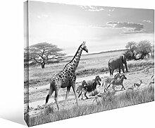 JP London bwmcnv22095,1cm Dick Schwergewicht Schwarz & White Gallery Wrap Leinwand African Animal Safari Plains Realismus gefunden Tapeten, 91,4x 61cm