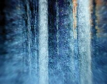JP London cnv1X 49623The Forest Ahorn Baum