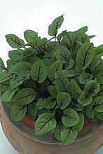 Just Seed Kraut Sauerampfer rot ge derter Rumex Acetosa Wiesen 50 g Samen Bulk Pack