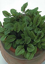 Just Seed Kraut Sauerampfer rot ge derter Rumex Acetosa Wiesen 20 g Samen Bulk Pack