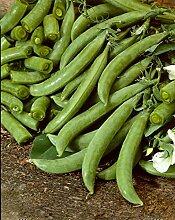 JustSeed Erbse Delikett, Gemüse, 3000 Samen