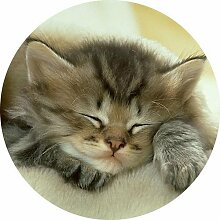 Kätzchen rund Mousepad Mauspad tolle Geschenkidee