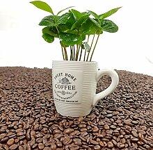 ✔️ Kaffee Pflanze mit Tasse ✔️ 1 Stück -