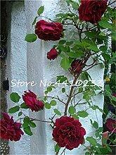 Kalash Neue 100 PC Kletterrose Blumensamen für