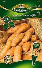 Kartoffel Bamberger Hörnchen 10 Stück   Pflanzkartoffeln von Quedlinburger