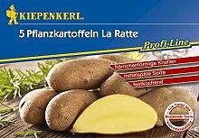 Kartoffel La Ratte 5 Stück (gelb, festkochend, mittelspät)   Pflanzkartoffeln von Kiepenkerl