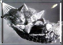 Katzen - Hängematte - Blechschilder Nostalgie - Grösse 11x8cm