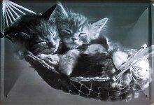 Katzen - Hängematte - Blechschilder Nostalgie - Grösse 20x30 cm
