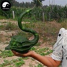 Kaufen Calabash-Kürbis-Samen 40pcs Pflanze Melone Gemüse Crane Leiter Flaschenkürbis