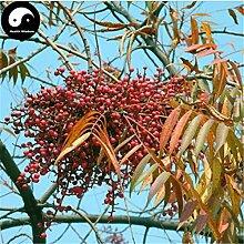 Kaufen Chinalack Baumsamen 50pcs Pflanze Lackbaum Baum Qi Shu