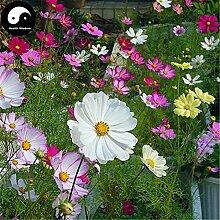 Kaufen Cosmos bipinnata Blumensamen 400pcs Pflanze Cosmos Blume für Familiengarten